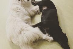 Linsey & Sansa